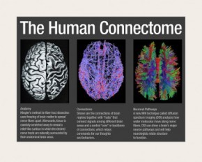 Our Beautiful Brain
